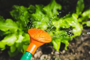 watering-plants-with-a-watering-can