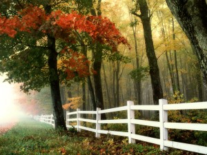 early-morning-autumn-fall-forest-fence-landscape